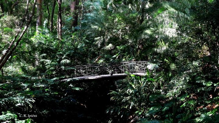 Jardín Húmedo (1)