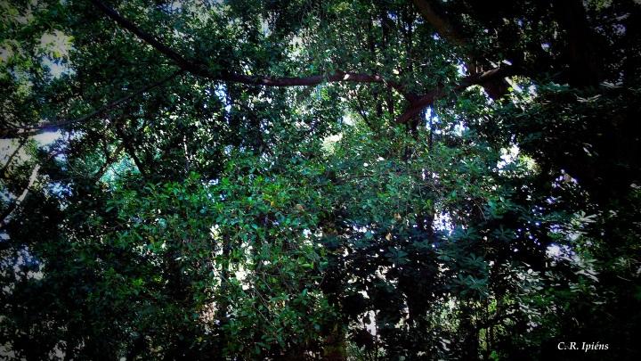 Jardín Húmedo (2)