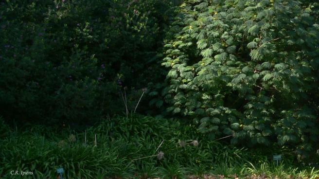Jardín del Loto