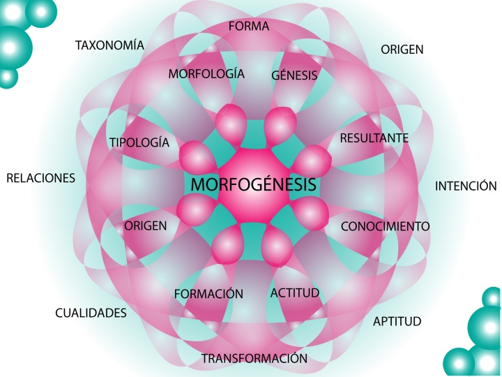 Morfogénesis