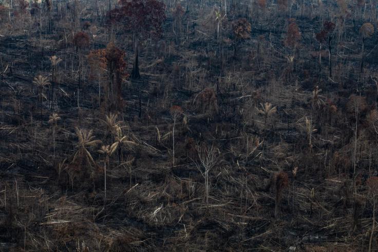 Amazon Burning