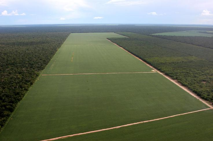 amazonia soja