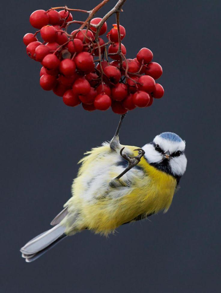 bird-photographer-of-the-year-2017-29-59ad0ae662851-jpeg__880
