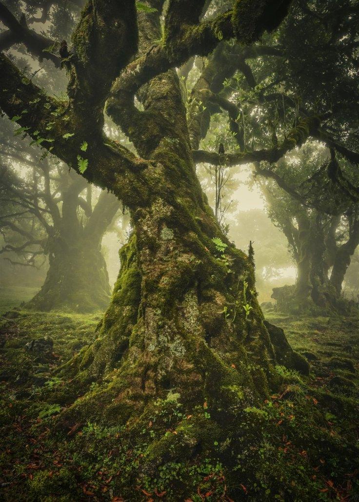 premio-especial-the-lone-tree-award_4e114e8a_1428x2000