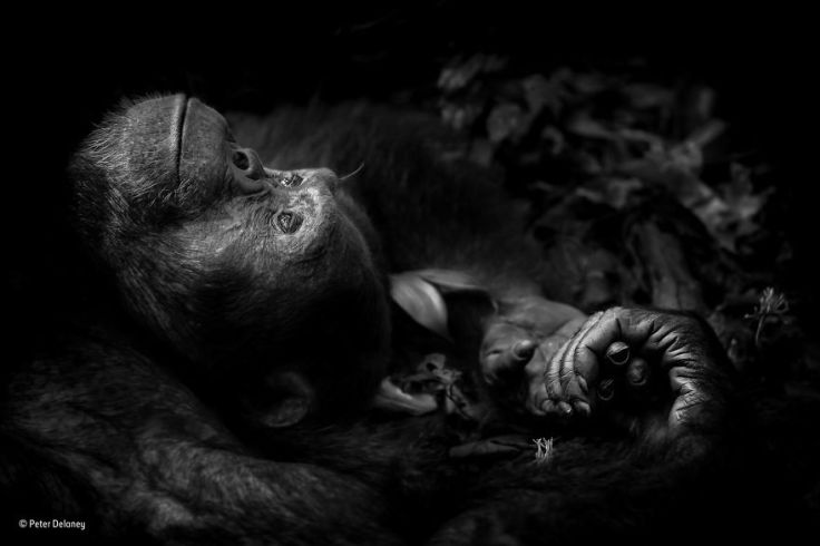 wildlife-photographer-of-the-year-2017-natural-history-museum-7-59e84d410f8ce__880
